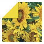 Rayher Scrapbooking-Papier: Sunflowers, 30,5x30,5 cm, 190g
